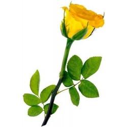 Κιτρινα τριανταφυλλα - Τιμη ανθοπωλειου Πατρας