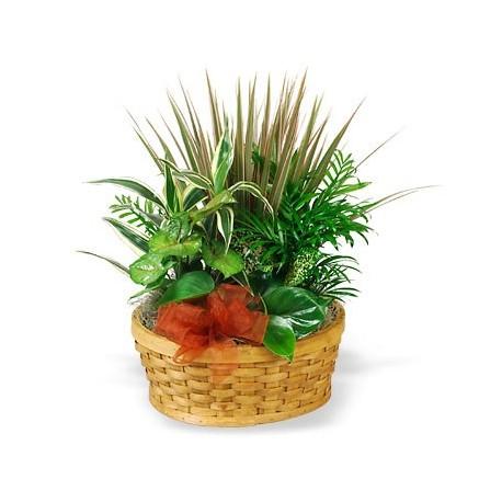 Basket with indoor plants