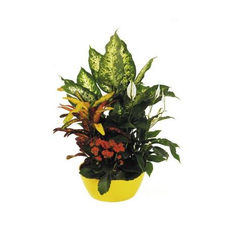 Caspo Greek plants mixed