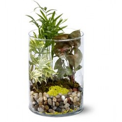 Small Garden in vase - Delivery Patras city