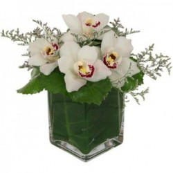 Orchid in vase - Delivery Patras city