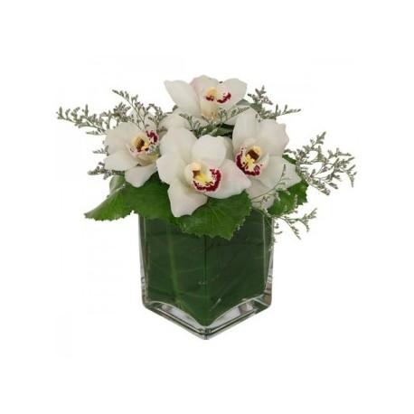 Orchid in vase - Delivery Patras city