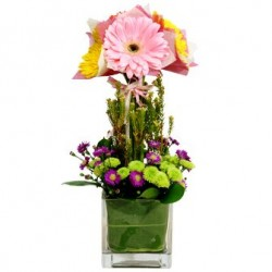 Gerberas in vase - Delivery Patras city