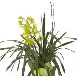 Ορχιδέα Φαλαίνοψις φυτο - Τιμη ανθοπωλειου Πατρας