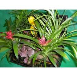 Κασετινα με Φυτα διαφορα  - Τιμη ανθοπωλειου Πατρας