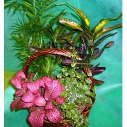 Καλαθι με Φυτα - Τιμη ανθοπωλειου Πατρας