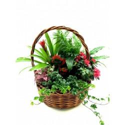 Καλαθι με πολυχρωμα φυτα - Τιμη ανθοπωλειου Πατρας