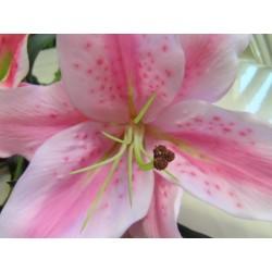 Οριενταλ ροζ - Τιμη ανθοπωλειου Πατρας