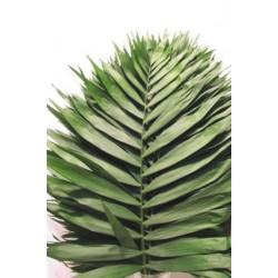 Τσικο πρασιναδα - Τιμη ανθοπωλειου Πατρας