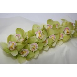 Orchid Cymbidium Green - Only for Patras city