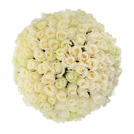 101 white roses