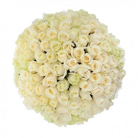 101 white roses