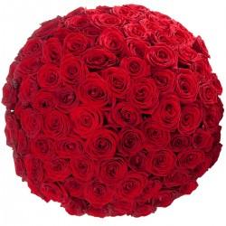 101 κόκκινα τριαντάφυλλα