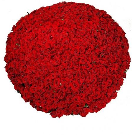 501 κόκκινα τριαντάφυλλα σε καλάθι