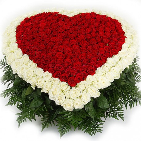 Heart of 301 red & white roses