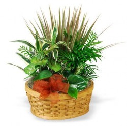 Basket with indoor plants