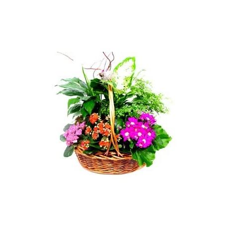 Καλαθι με διαφορα φυτα