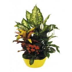 Φυτα σε κασπο