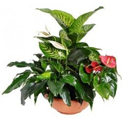 Κασπο με διαφορα μεγαλα φυτα