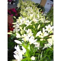 Florist Patras